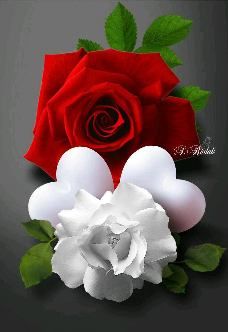 صورة ورود رومانسية , اجمل صور ورود جميلة ورومانسية 3746 2