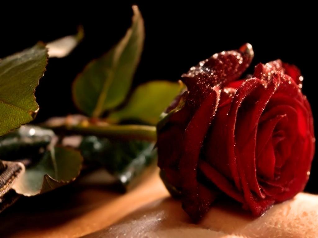 صورة ورود رومانسية , اجمل صور ورود جميلة ورومانسية 3746 9