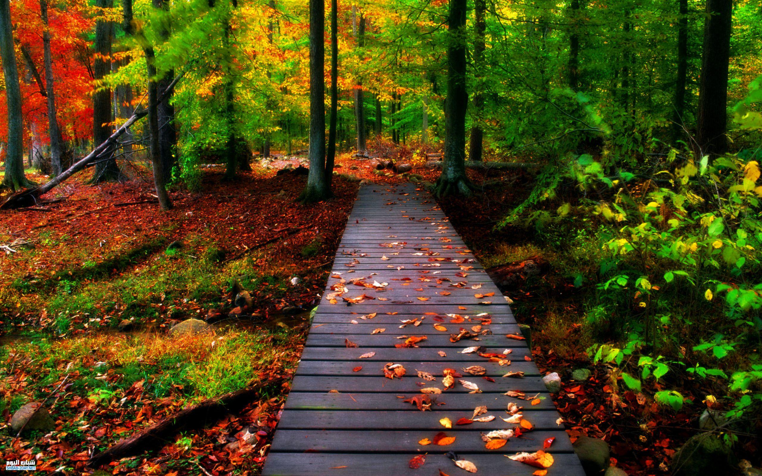 صورة اجمل الصور الطبيعية في العالم , مناظر طبيعية خلابة 4055 7