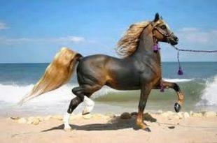 صور اجمل خيول في العالم , خيول جميله في العالم