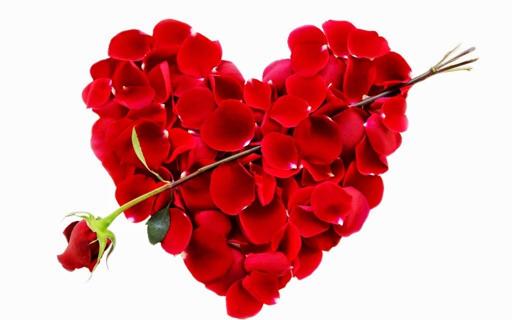 صورة اجمل صور الورد , صور ورود جميله و رقيقه