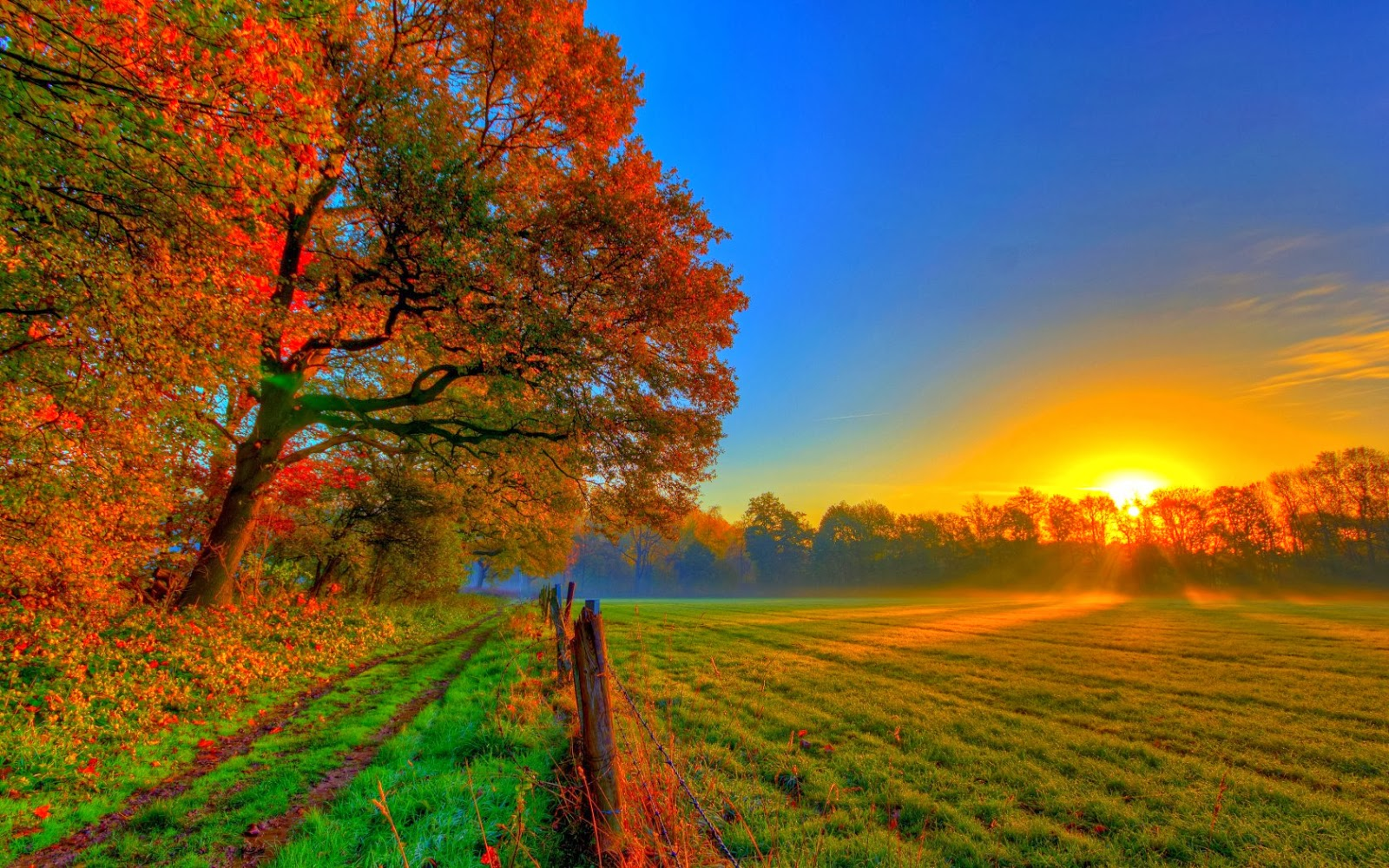 صورة صباح الورد والفل , صباح السعادة