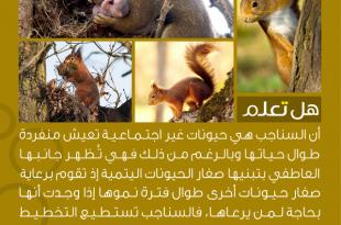 صورة هل تعلم عن الحيوانات , حقائق غريبة واسرار عجيبة عن الحيوانات