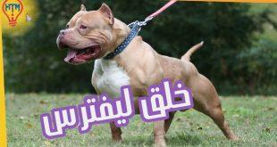 صورة اشرس انواع الكلاب , تعرف على انواع الكلاب الشرسة