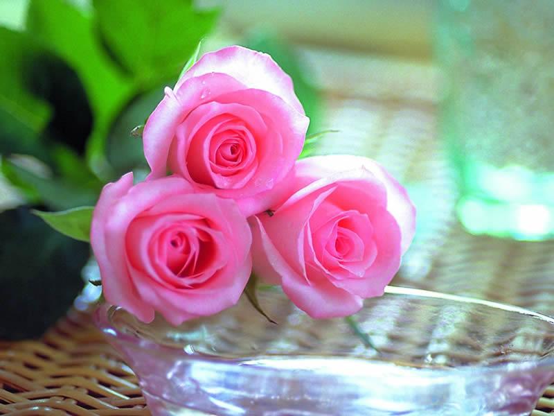 صورة صور ورد جميل , اجمل اشكال الورود في الصباح 2022 2