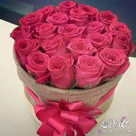 صورة صور ورد جميل , اجمل اشكال الورود في الصباح 2022 3