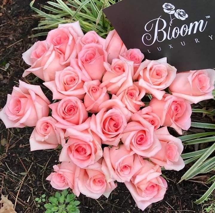 صورة صور ورد جميل , اجمل اشكال الورود في الصباح 2022 7