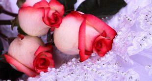 اجمل ورود الحب , صور اجمل باقات الورود