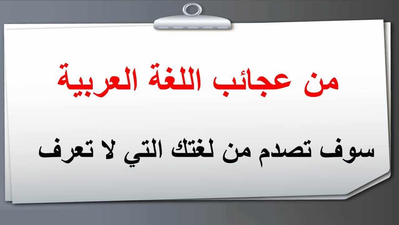 صور معلومات عن اللغه العربيه , ما لا تعرفه عن اللغه العربيه