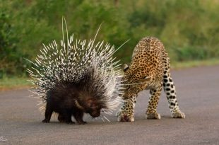 صورة اغرب الحيوانات , تعيش معنا على كوكب الارض