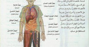 صورة صور جسم الانسان , ماهي مكونات جسم الانسان