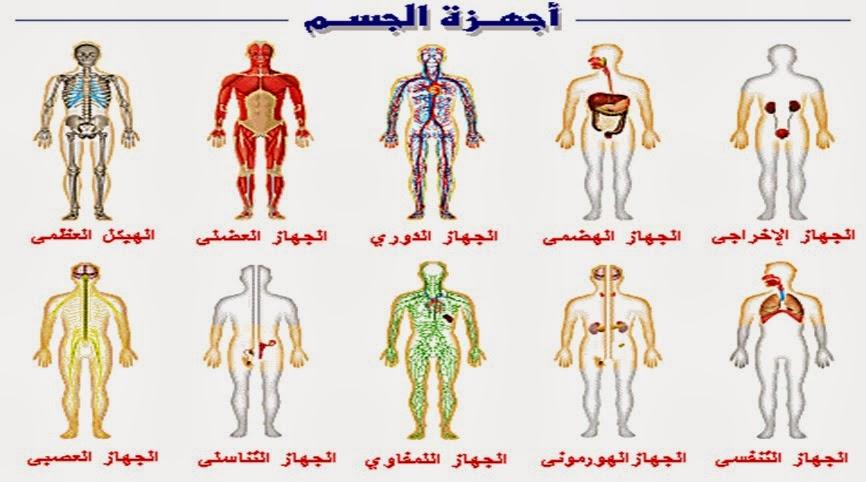 صور جسم الانسان ماهي مكونات جسم الانسان كارز