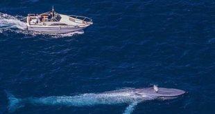 اكبر حوت في العالم , الحوت الازرق اضخم الحيتان فى العالم