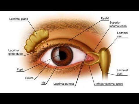 صورة مكونات العين , اجزاء العين واهميتها 6468