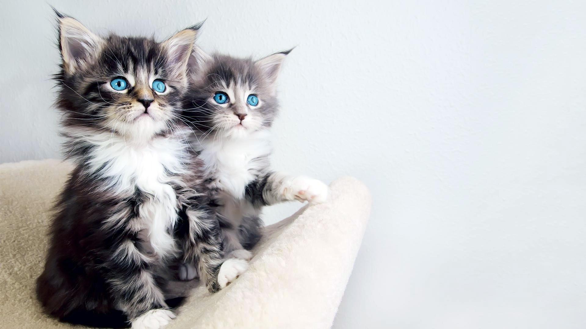 صور صور قطط جميلة , اجمل قطط في الكون كله