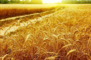 صورة خلفيات ذهبية , احدث الخلفيات المميزه باللون الذهبي لاجلك