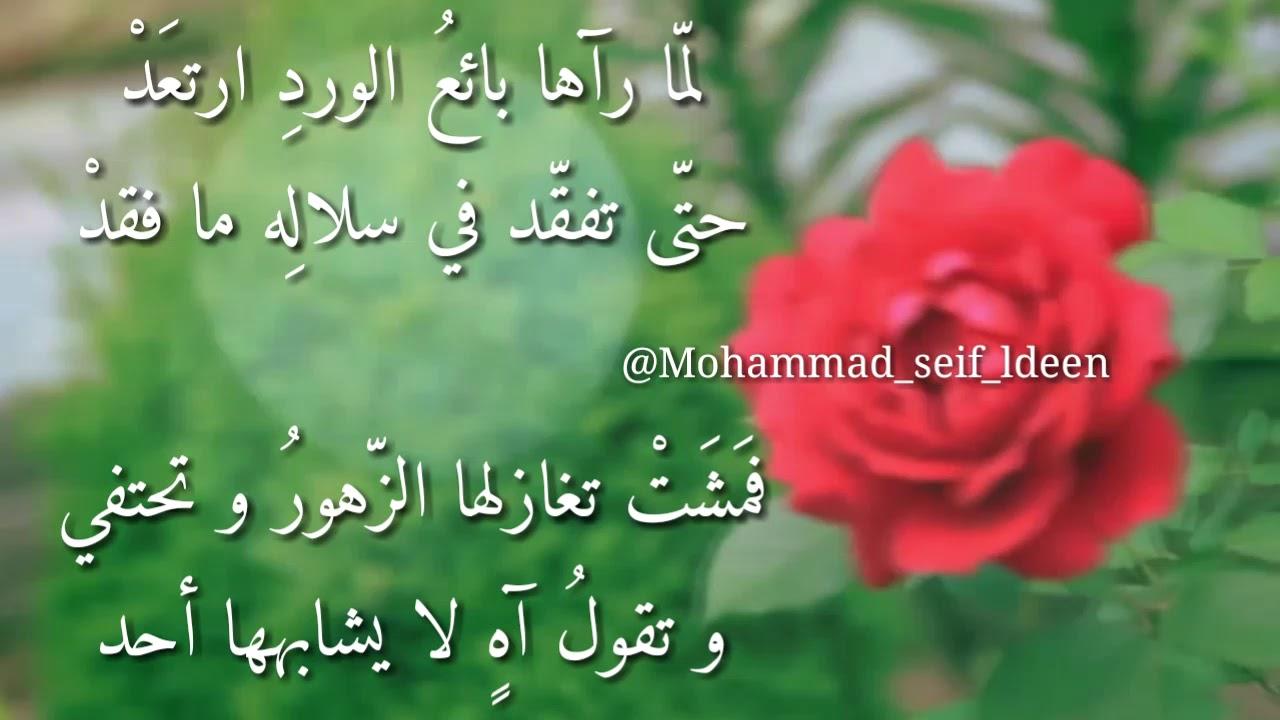 صورة كلمات عن الورد , اروع الصور والكلمات عن الورود 3096 1