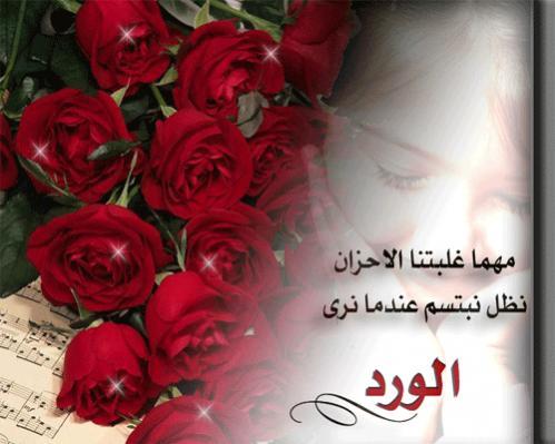 صورة كلمات عن الورد , اروع الصور والكلمات عن الورود 3096 4