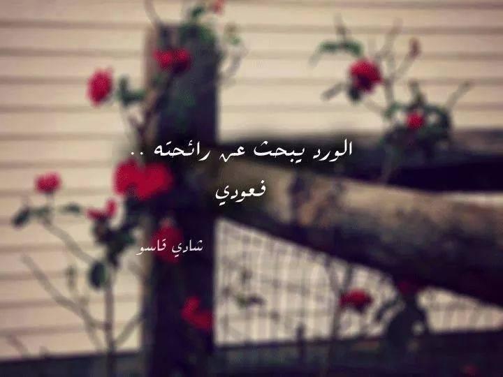 صورة كلمات عن الورد , اروع الصور والكلمات عن الورود 3096 6