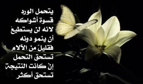 صورة كلمات عن الورد , اروع الصور والكلمات عن الورود 3096 7