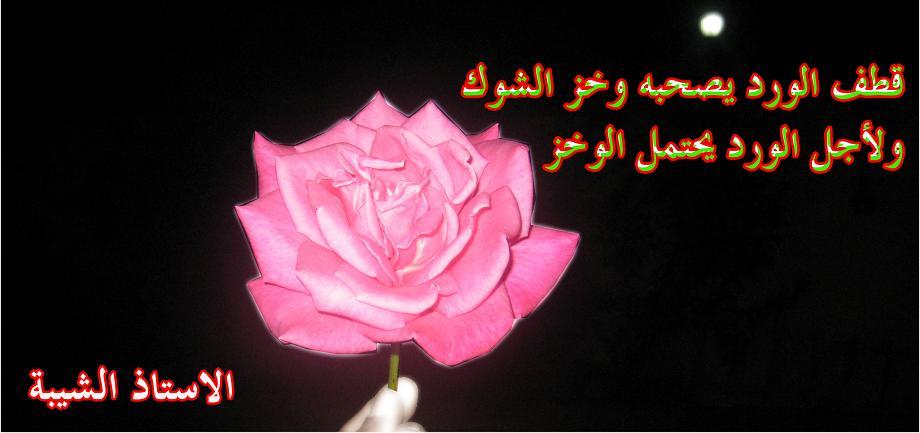 صورة كلمات عن الورد , اروع الصور والكلمات عن الورود 3096 8