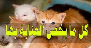 صورة كيفية تربية القطط , الطريقة الصحيحة لتربية القطط بالمنزل