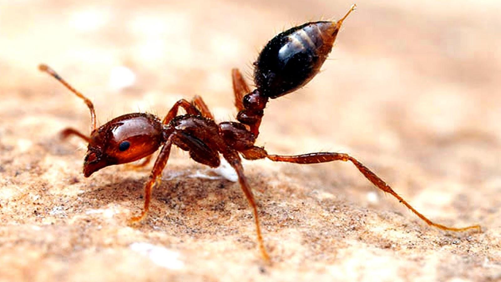 صور معلومات عن النمل , معلومات عن النمل لن تصدقها