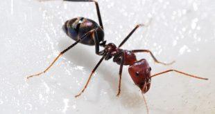 صورة معلومات عن النمل , معلومات عن النمل لن تصدقها 3224 3 310x165