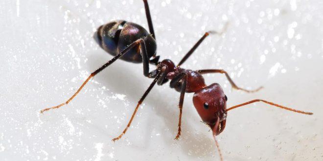 صورة معلومات عن النمل , معلومات عن النمل لن تصدقها