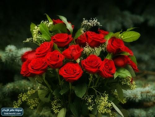 صورة اجمل وردة في العالم , احلى الورود فى العالم 4756 5