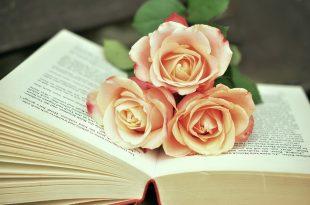 صورة ورد طبيعي , اجمل الورود الطبيعيه الحمرا