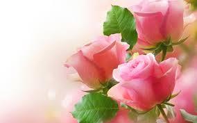 صورة ورد طبيعي , اجمل الورود الطبيعيه الحمرا 5201 3