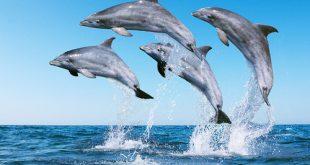 صور دلفين في المنام , محبي تفسير الاحلام هذه رؤية شيقة لحلم للدلفين