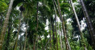 بالصور مدينة غوا الهندية , للسياحة الهندية سحرها خصيصا مدينة غوا تعرف عليها هنا 10651 12 310x165