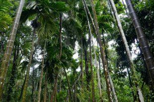 بالصور مدينة غوا الهندية , للسياحة الهندية سحرها خصيصا مدينة غوا تعرف عليها هنا 10651 12 310x205