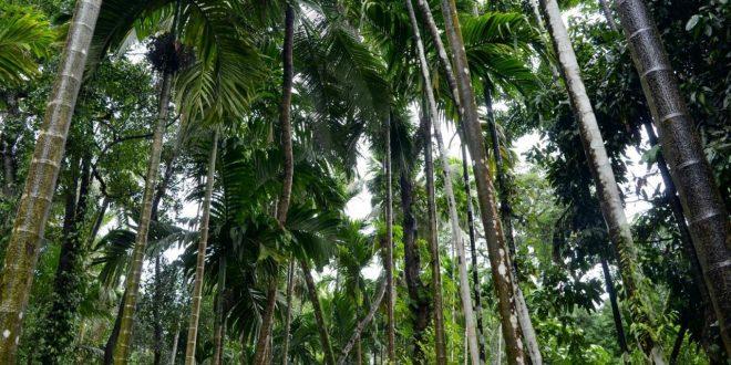 صور مدينة غوا الهندية , للسياحة الهندية سحرها خصيصا مدينة غوا تعرف عليها هنا