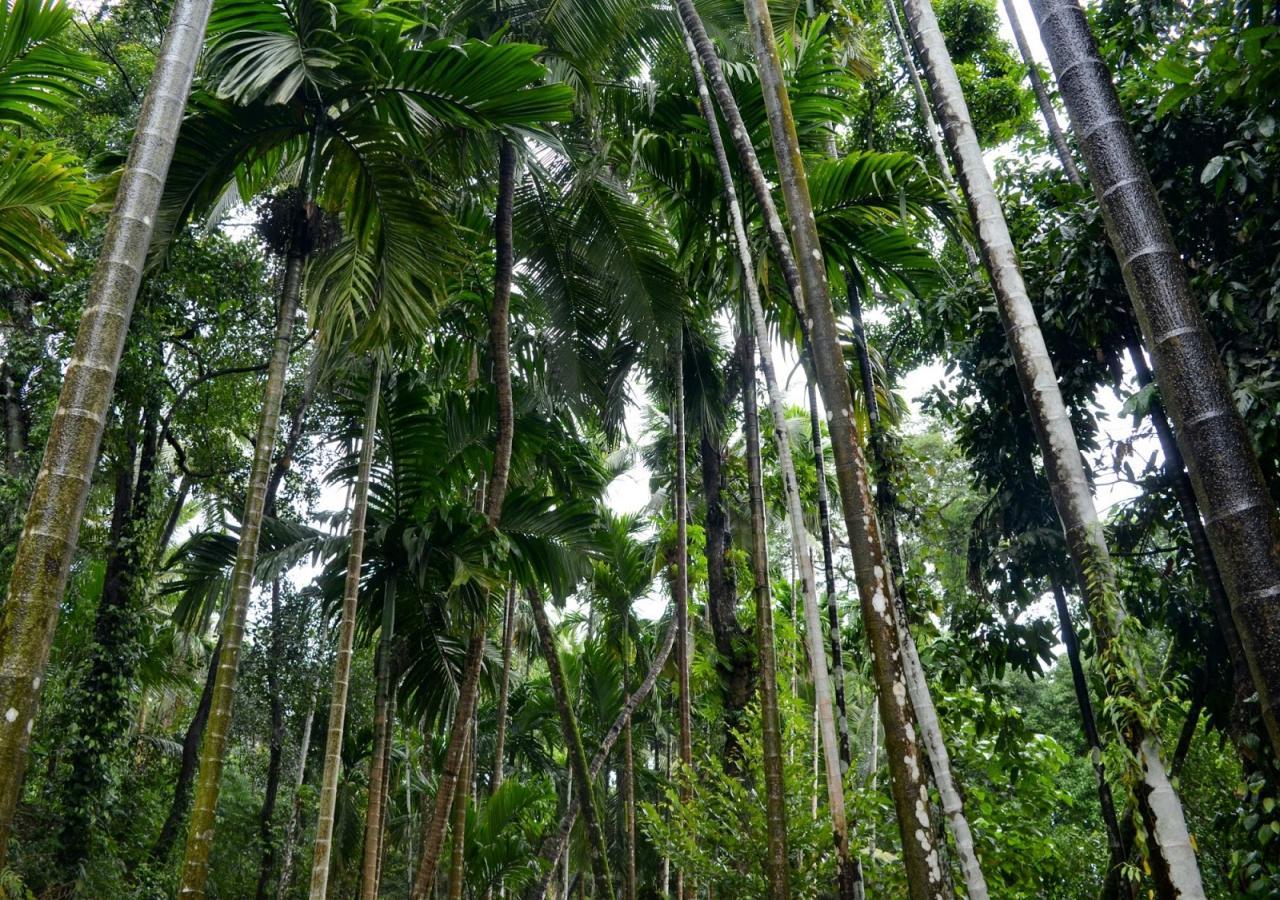 صورة مدينة غوا الهندية , للسياحة الهندية سحرها خصيصا مدينة غوا تعرف عليها هنا
