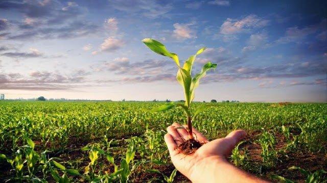 صور تعبير عن الزراعة , اهمية الزراعة في حياتنا