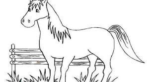 صور صور رسومات حصان , ابرز صور توضح جمال الحصان