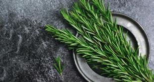 صور نبتة تستخدم في الطعام وتكثر زراعتها في البيوت , تعرف على فائدة زراعة اكليل الجبل في المنزل