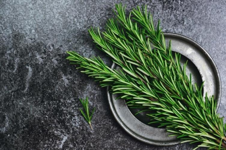 صورة نبتة تستخدم في الطعام وتكثر زراعتها في البيوت , تعرف على فائدة زراعة اكليل الجبل في المنزل