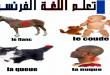 صورة اسماء الحيوانات بالفرنسي , كيف تكتب اسماء الحيوانات باللغة الفرنسية