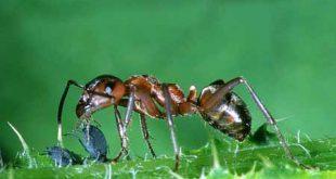 صورة قصص قصيرة للاطفال , قصة تعلم من النمل