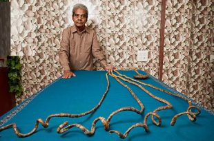 صورة اطول اظافر في العالم , لن تتخيل طول الظافر