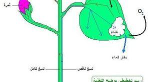صورة بحث حول التغذية عند النبات الاخضر , معلومات قيمه جدا عن النبتات
