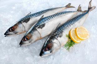 صورة انواع السمك بالصور , تعرف على اشكال وانواع الاسماك