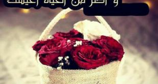 صورة صور حب للزوجة , عبر لمراتك بالصور دى وشوف النتيجه