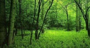 صورة فوائد الغابات وكيفية المحافظة عليها , طرق حماية الغابات