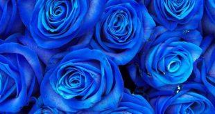 صورة على ماذا يدل اللون الازرق , اللون الازرق والشخصية