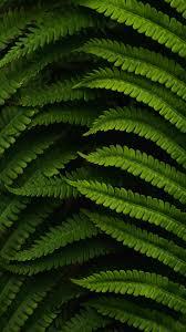 اكثر الخلفيات راحة للعين , خلفية خضراء